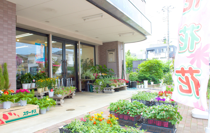 アプリコット花金   富山県富山市(電鉄富山)の花 …